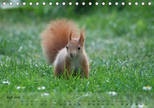 Spaß mit Eichhörnchen-Kindern