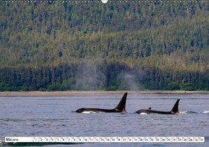 Alaskas Tierwelt - Paradies im Norden (Wandkalender 2019 DIN A2