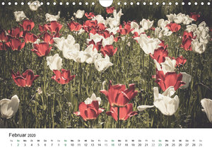 Frühlingsfreuden - Ein ganzes Jahr