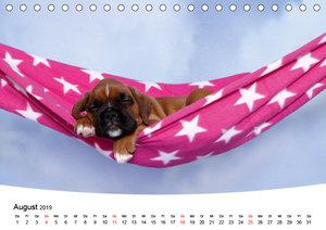 Süße Träume 2019 - schlafende Hundewelpen (Tischkalender 2019 DI