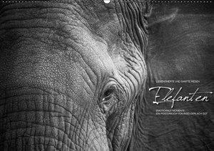Emotionale Momente: Elefanten (PosterbuchDIN A2 quer)