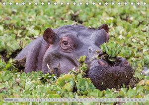 Emotionale Momente. Happy Hippo / CH-Version