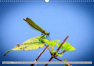 Farbenvolle Pracht der Libellen (Wandkalender 2020 DIN A3 quer)