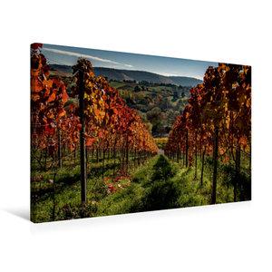 Premium Textil-Leinwand 75 cm x 50 cm quer Im Weinberg