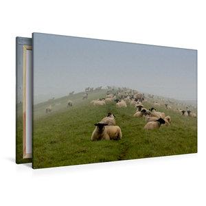 Premium Textil-Leinwand 120 cm x 80 cm quer Schafsherde
