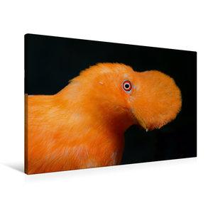 Premium Textil-Leinwand 90 cm x 60 cm quer Cayenne-Klippenvogel