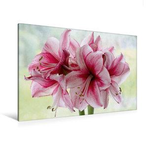 Premium Textil-Leinwand 120 cm x 80 cm quer Amaryllis-Blüten
