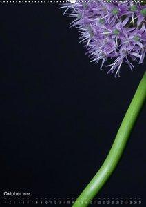 Blütenpracht im Detail