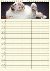 Zauberhafte Katzen - Familienplaner (Wandkalender 2019 DIN A4 ho