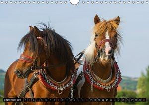 Welt der Pferde