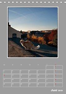 Katzen Blues / Planer (Tischkalender 2019 DIN A5 hoch)