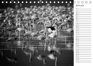 Flamingo Impressionen 2018