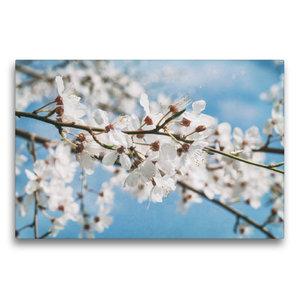 Premium Textil-Leinwand 75 cm x 50 cm quer Kirschblütenpracht