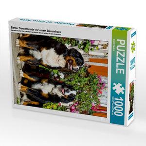 Berner Sennenhunde vor einem Bauernhaus 1000 Teile Puzzle hoch