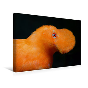 Premium Textil-Leinwand 45 cm x 30 cm quer Cayenne-Klippenvogel