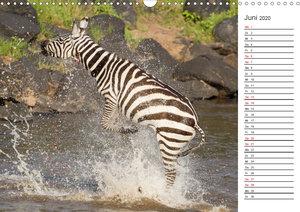Emotionale Momente: Die besten Zebrafotos von Ingo Gerlach