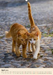 Katzen von Rhodos (Wandkalender 2019 DIN A2 hoch)