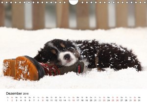 Welpenträume - Mit niedlichen Hundewelpen durch das Jahr