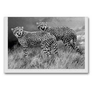 Premium Textil-Leinwand 90 cm x 60 cm quer Junge Gepardengeschwi