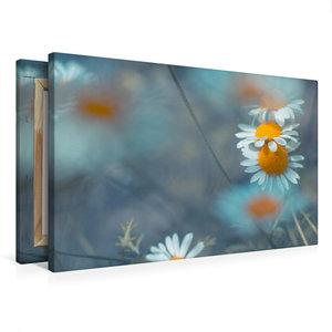 Premium Textil-Leinwand 75 cm x 50 cm quer Kamille