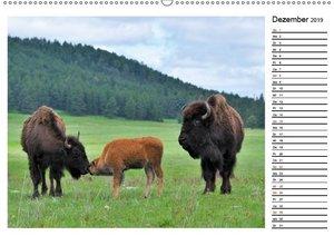 Tiere der Great Plains (Wandkalender 2019 DIN A2 quer)