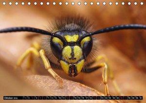 Faszination Makrofotografie: Wespen und Bienen