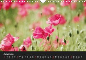 Rosen und Mohnblüten Momente mit österreichischem KalendariumAT-