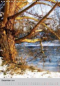Faszination Baum
