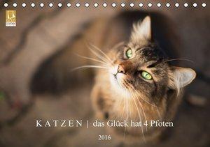 K A T Z E N das Glück hat 4 Pfoten (Tischkalender 2016 DIN A5 qu