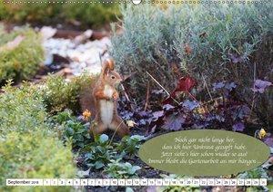 Eichhörnchen - Lustige Kurzgeschichten mit den quirligen Wildtie