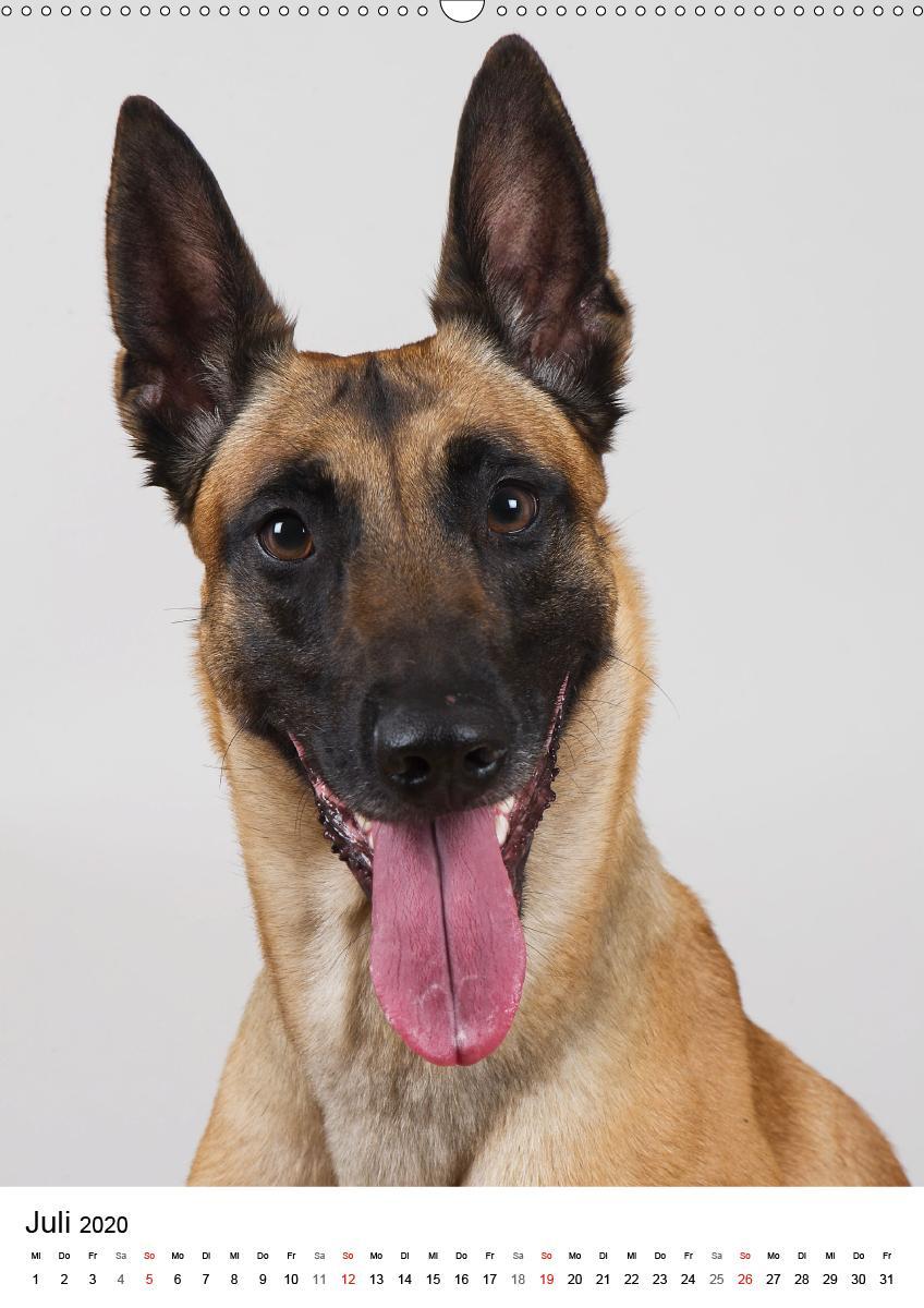 Hunde im Portrait - zum Schließen ins Bild klicken