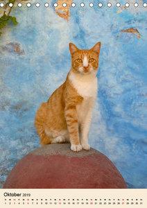 Katzen von Rhodos (Tischkalender 2019 DIN A5 hoch)