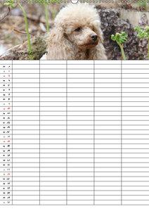 Der Pudel-Familienplaner (Wandkalender 2019 DIN A2 hoch)