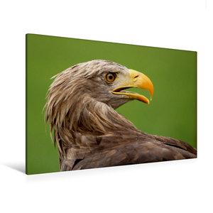 Premium Textil-Leinwand 120 cm x 80 cm quer Seeadler