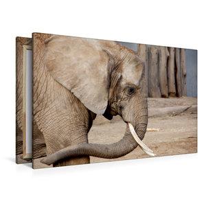 Premium Textil-Leinwand 120 cm x 80 cm quer Afrikanischer Elefan