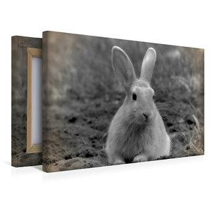 Premium Textil-Leinwand 45 cm x 30 cm quer Kaninchen