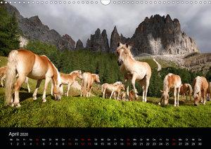 Wunderschöne Haflingerwelt (Wandkalender 2020 DIN A3 quer)