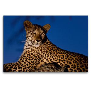 Premium Textil-Leinwand 120 cm x 80 cm quer Leopard auf seinem L