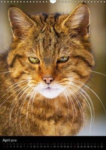 Wildkatzen - scheue Jäger
