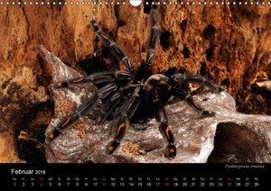 Vogelspinnen - Tarantulas