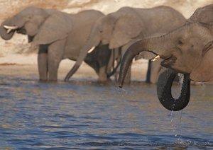 Afrikanische Elefanten (Posterbuch DIN A2 quer)