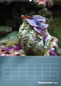 Bunte Riffbewohner - Fische, Anemonen und noch viel mehr