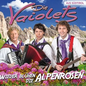 Wieder blühen die Alpenrosen