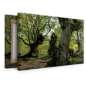 Premium Textil-Leinwand 45 cm x 30 cm quer Rindenherz im Zauberw