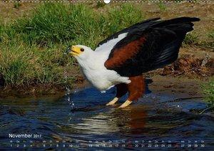 Vogelwelten am Chobe