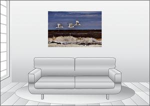 Premium Textil-Leinwand 120 cm x 80 cm quer Drei Möwen Trilogie
