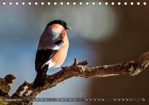 NATUR PUR Vertraute Singvögel (Tischkalender 2019 DIN A5 quer)