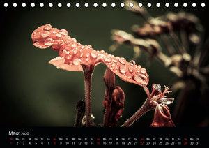 Vintage - Naturaufnahmen (Tischkalender 2020 DIN A5 quer)