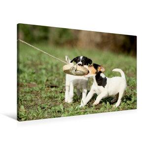 Ausgesetzte und kranke Hunde an der wunderschönen Costa de la Lu