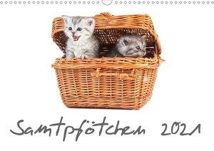 Samtpfötchen (Wandkalender 2021 DIN A4 quer)